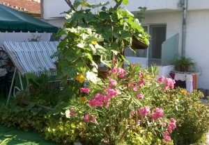 """Заден двор на къща за гости """"Лодоз"""", 2015"""